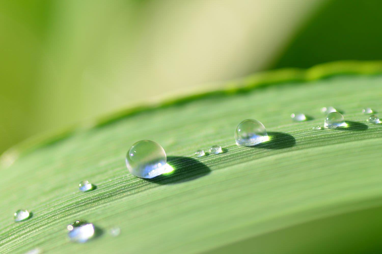 Bild zeigt: Großaufnahme eines Blattes mit Wassertropfen
